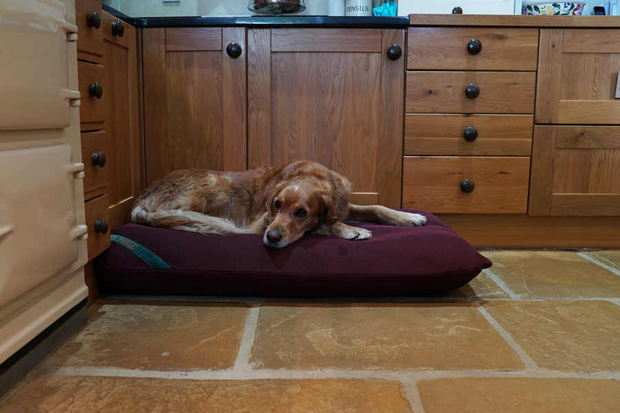 The Wicking Mattress Dog Bed Cover Thumbnail