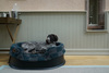 The Raised Tuffies Dog Bed Thumbnail