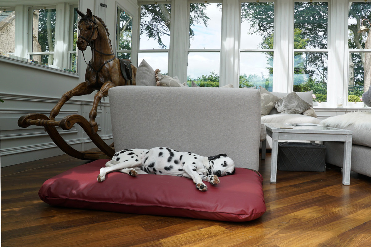 Picture of: The Wipe Clean Mattress Dog Bed Dog Mattress Beds And Covers Last Order Date For Guaranteed Christmas Delivery Is The 8th December Tuffies