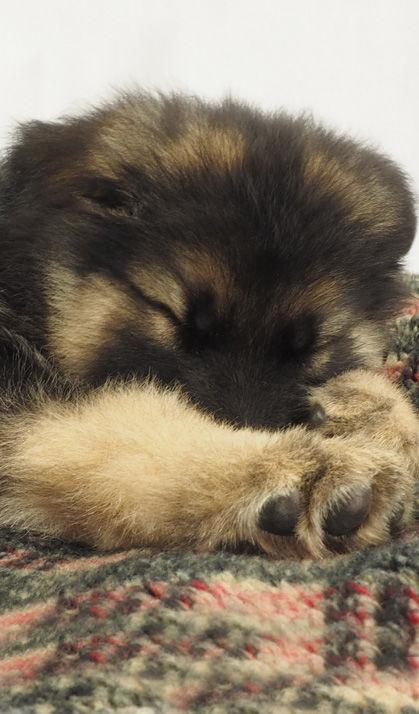 Buy Luxury Dog Beds Uk Online British Handmade Heavy Duty
